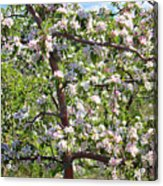 Beautiful Blossoms - Digital Art Acrylic Print by Carol Groenen