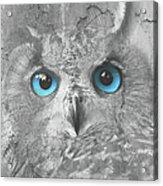 Beautiful Blue-eyed Owl Acrylic Print