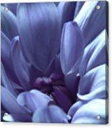 Beautiful Blue Acrylic Print
