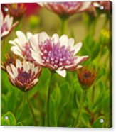 Beautiful Boquet Acrylic Print