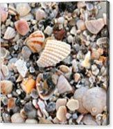 Beautiful Broken Shells Acrylic Print