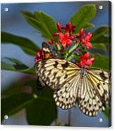 Beautiful Broken Wings Acrylic Print