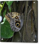 Beautiful Brown Morpho Butterfly In A Lush Garden  Acrylic Print