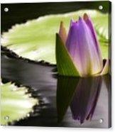 Beautiful Bud Reflection Acrylic Print