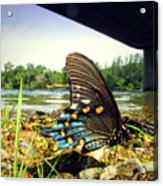 Beautiful Butterfly At The River II Acrylic Print