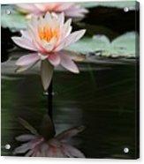 Beautiful Colorado Water Lilies Acrylic Print
