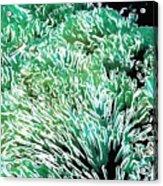 Beautiful Coral Reef 2 Acrylic Print