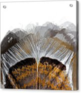 Beautiful Feather Acrylic Print