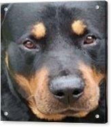 Beautiful Female Rottweiler Portrait Vector Acrylic Print