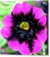 Beautiful Flower Acrylic Print by Annette Allman