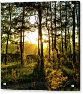 Beautiful Forest At Sunrise Acrylic Print