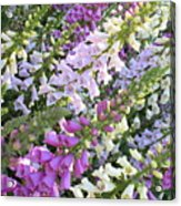 Beautiful Foxglove Acrylic Print