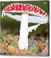 Beautiful Fungus Acrylic Print