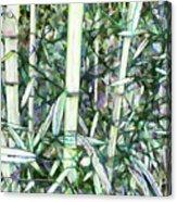 Beautiful Green Leaf Bamboo Acrylic Print