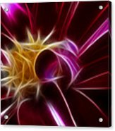 Beautiful Insight Of A Dahlia Acrylic Print