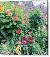 Beautiful Lot Of Dahlias,butchart Gardens,victoria,canada Acrylic Print