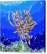 Beautiful Marine Plants 1 Acrylic Print by Lanjee Chee