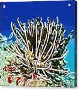 Beautiful Marine Plants 11 Acrylic Print by Lanjee Chee