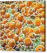 Beautiful Marine Plants 3 Acrylic Print
