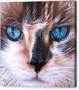 Beautiful Mia Acrylic Print