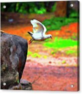 Beautiful Moment With A Bird Take Off , Wall Frame, Art Acrylic Print