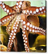 Beautiful Octopus Acrylic Print