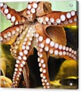 Beautiful Octopus Acrylic Print by Marilyn Hunt