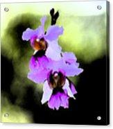 Beautiful Orchid Acrylic Print