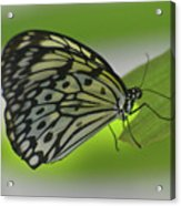 Beautiful Paper Kite Butterfly On A Green Leaf Acrylic Print