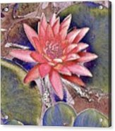 Beautiful Pink Lotus Abstract Acrylic Print