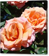 Beautiful Pink Orange Rose Flowers Garden Baslee Troutman  Acrylic Print