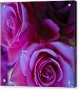 Beautiful Purple Roses 2 Acrylic Print