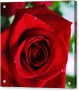 Beautiful Red Rose Abstract 3 Acrylic Print