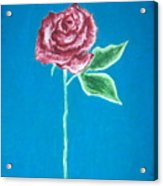 Beautiful Rose On  Blue Background Acrylic Print