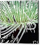 Beautiful Sea Anemone 3 Acrylic Print by Lanjee Chee