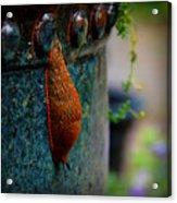 Beautiful Slug Acrylic Print