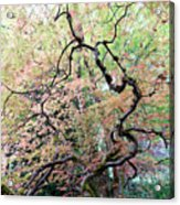 Beautiful Japanese Garden,butchart Gardens,victoria,canada 1. Acrylic Print