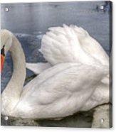 Beautiful Swans Acrylic Print