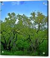 Beautiful Texas View 2 Acrylic Print