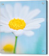 Beautiful Textured Background Of A Daisy Flower Acrylic Print