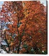 Beautiful Tree Acrylic Print