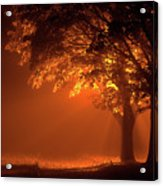 Beautiful Trees At Night With Orange Light Acrylic Print