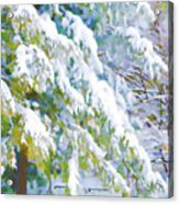 Beautiful Trees Covered With Snow In Winter Park Acrylic Print