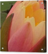 Beautiful Unfolding Acrylic Print