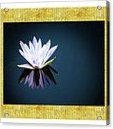 Beautiful Waterlilies Acrylic Print