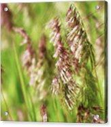 Beautiful Weeds Acrylic Print