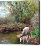 Beautiful White Horse And Enchanting Spring Acrylic Print
