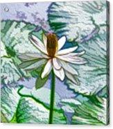 Beautiful White Water Lilies Flower Acrylic Print
