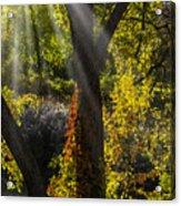 Beautiful Woodlands Acrylic Print