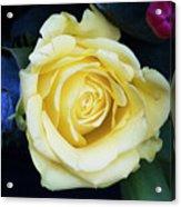 Beautiful Yellow Rose Acrylic Print